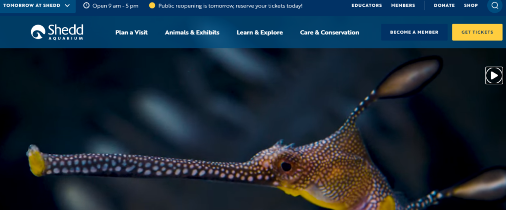 Shedd Aquarium virtual