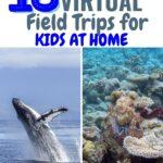 ocean field trip for homeschooled kids